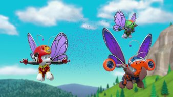 Un essaim de papillons