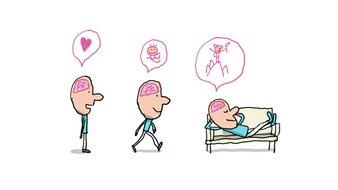 A quoi  sert le cerveau ?