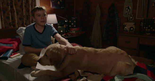 Regarder: Un chien pour Noël