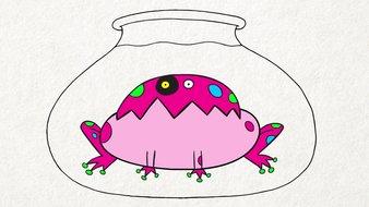La grenouille déjantée