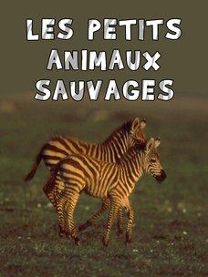 Les petits animaux sauvages: regarder le documentaire