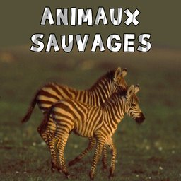 avatar Les petits animaux sauvages