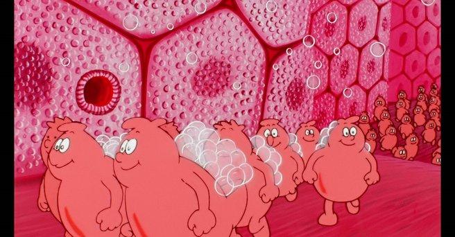 Regarder: La planète cellule
