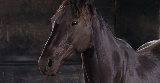 Regarder: Par amour des chevaux