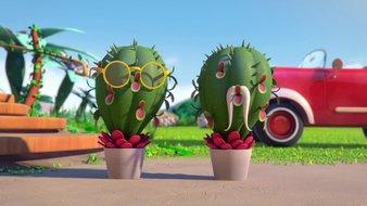 Opération cactus