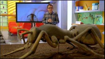 Le génie des fourmis