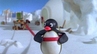 Le bracelet de Pingu
