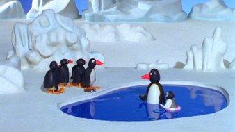 Pingu à la piscine