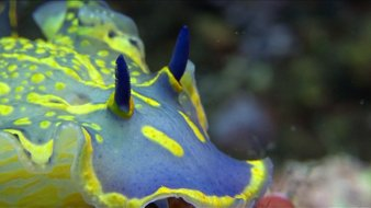 Les nudibranches