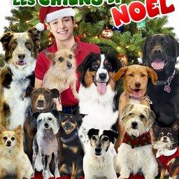 avatar Il faut sauver les chiens de Noël